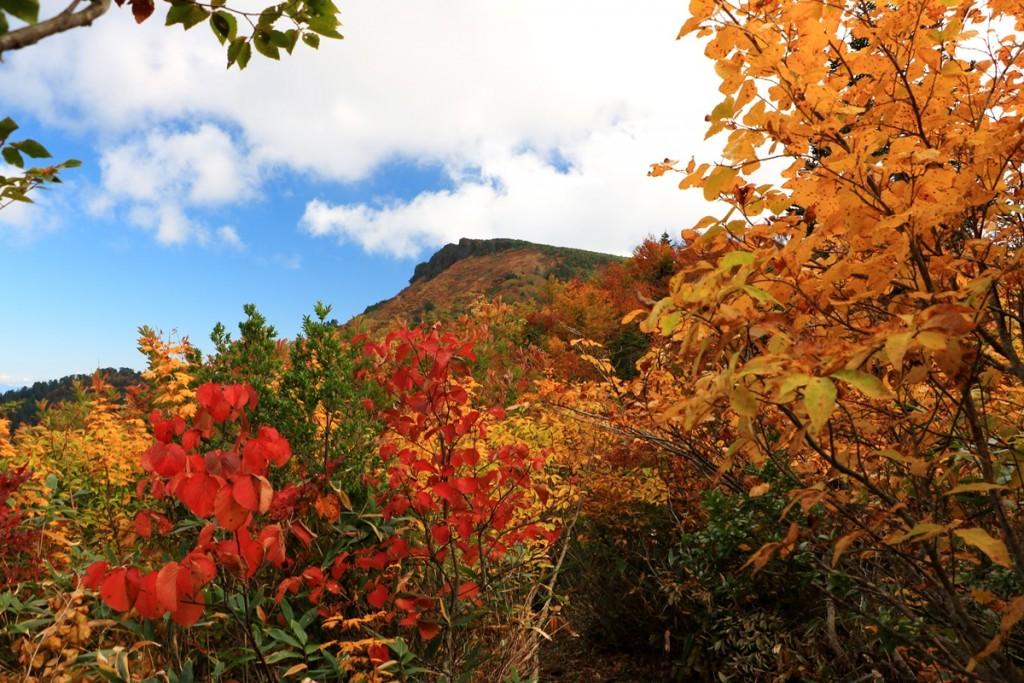 14 ふくべ谷登山道の紅葉のトンネルと三方岩岳2s・10月頃