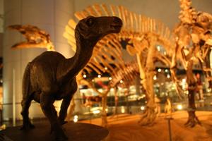 ホテルを恐竜博物館へのアクセスで選ぶなら
